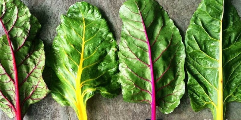 The 12 Best Vegan Protein Sources - Leafy Greens