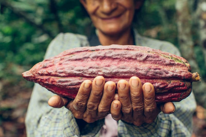 15 Fat Burning Foods - Cacao