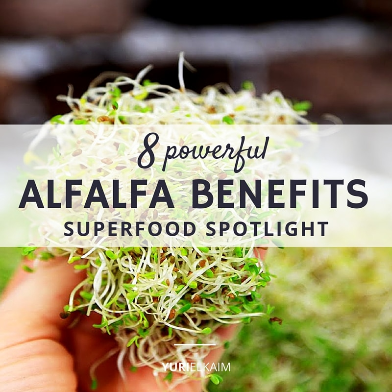 Superfood Spotlight- 8 Powerful Alfalfa Benefits