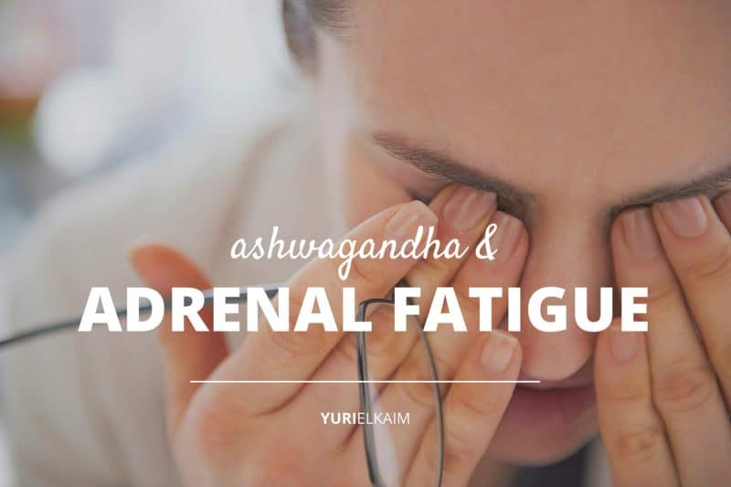 Ashwagandha and Adrenal Fatigue- Can This Little-Known Herb Save Your Adrenals