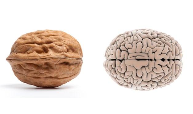 walnut looks like a brain