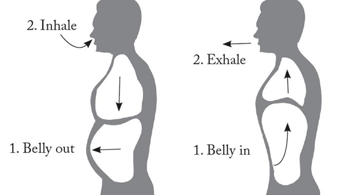 belly breathing illustration